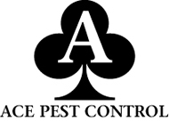 Pest Control Services in North London and Hertfordshire